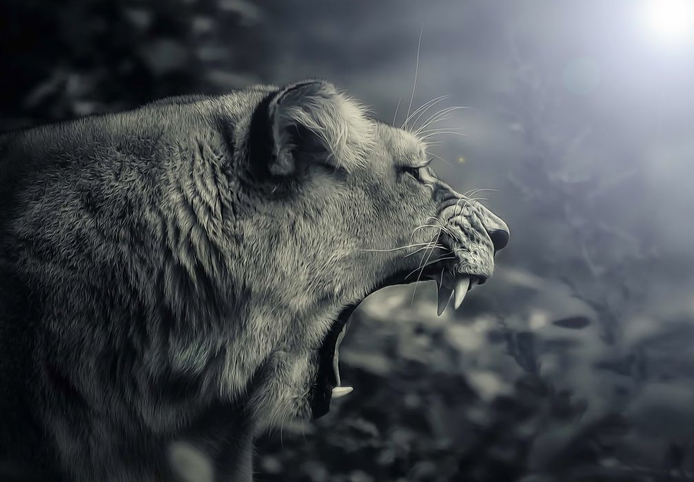 predator teeth jaws teeth lion wallpaper