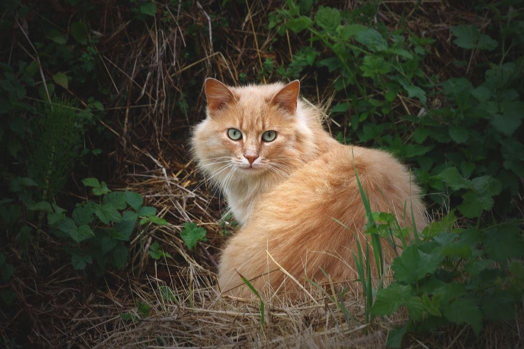 red cat grass wallpaper