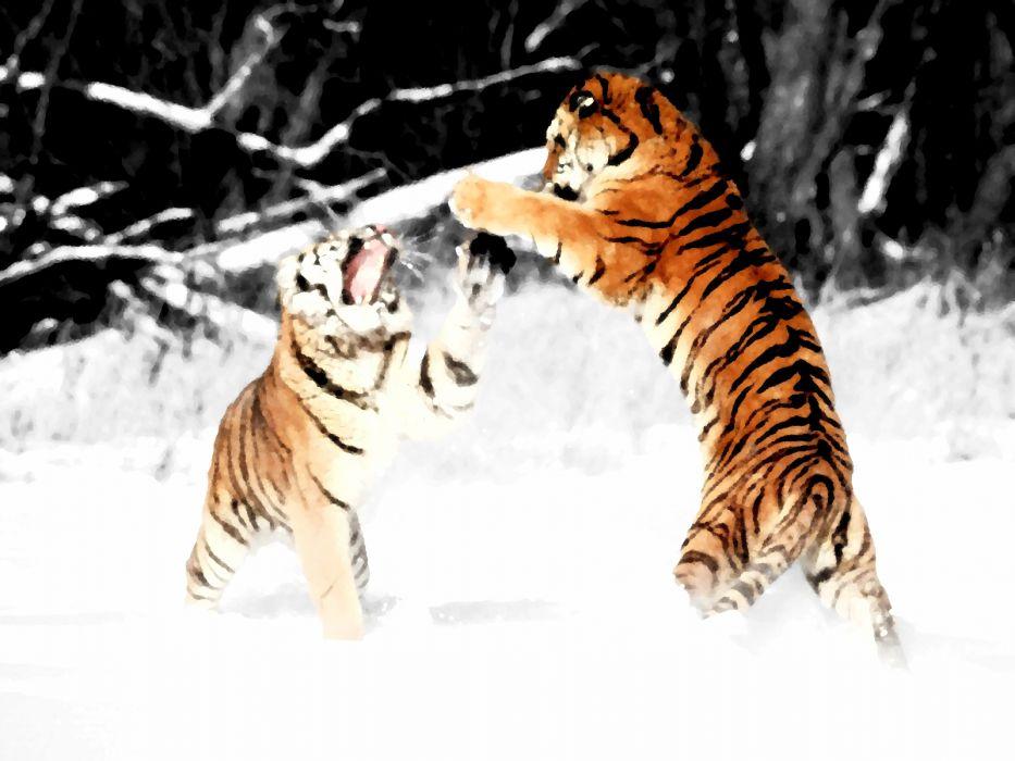 tiger predator battle winter      f wallpaper