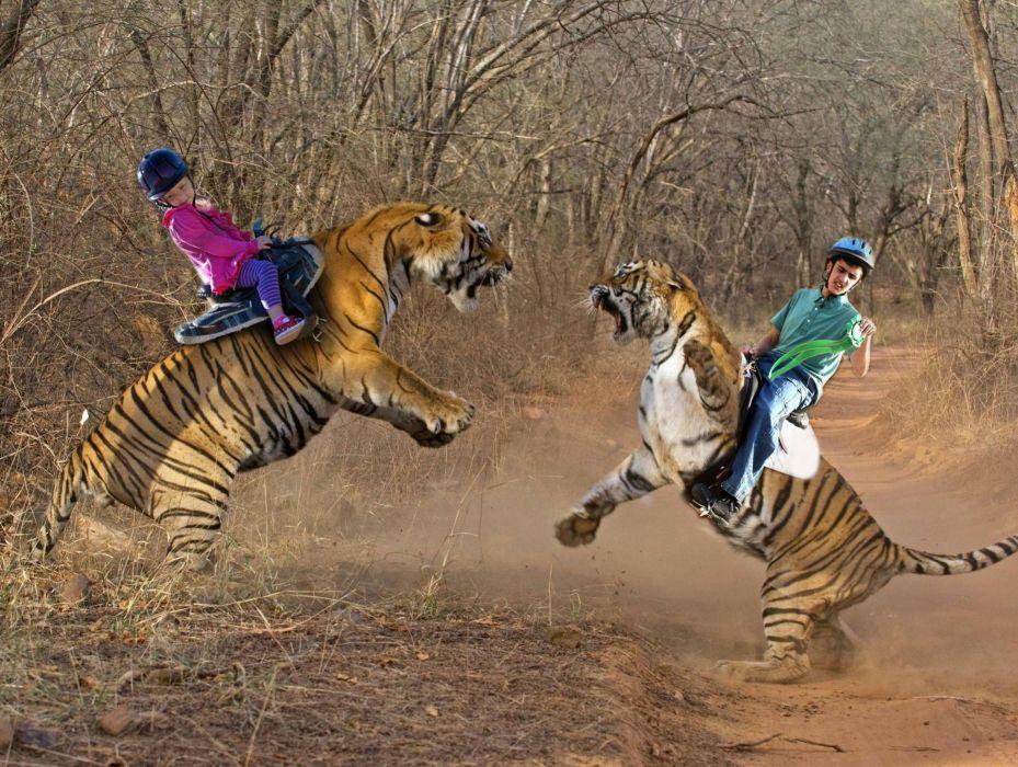 tiger predator creative photoshop humor funny       f wallpaper