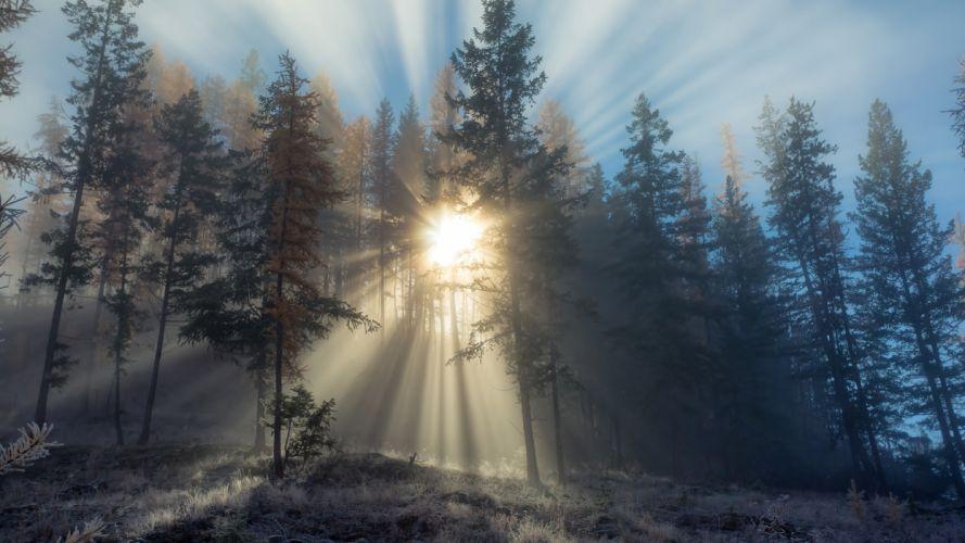 Sunbeam through Tree wallpaper