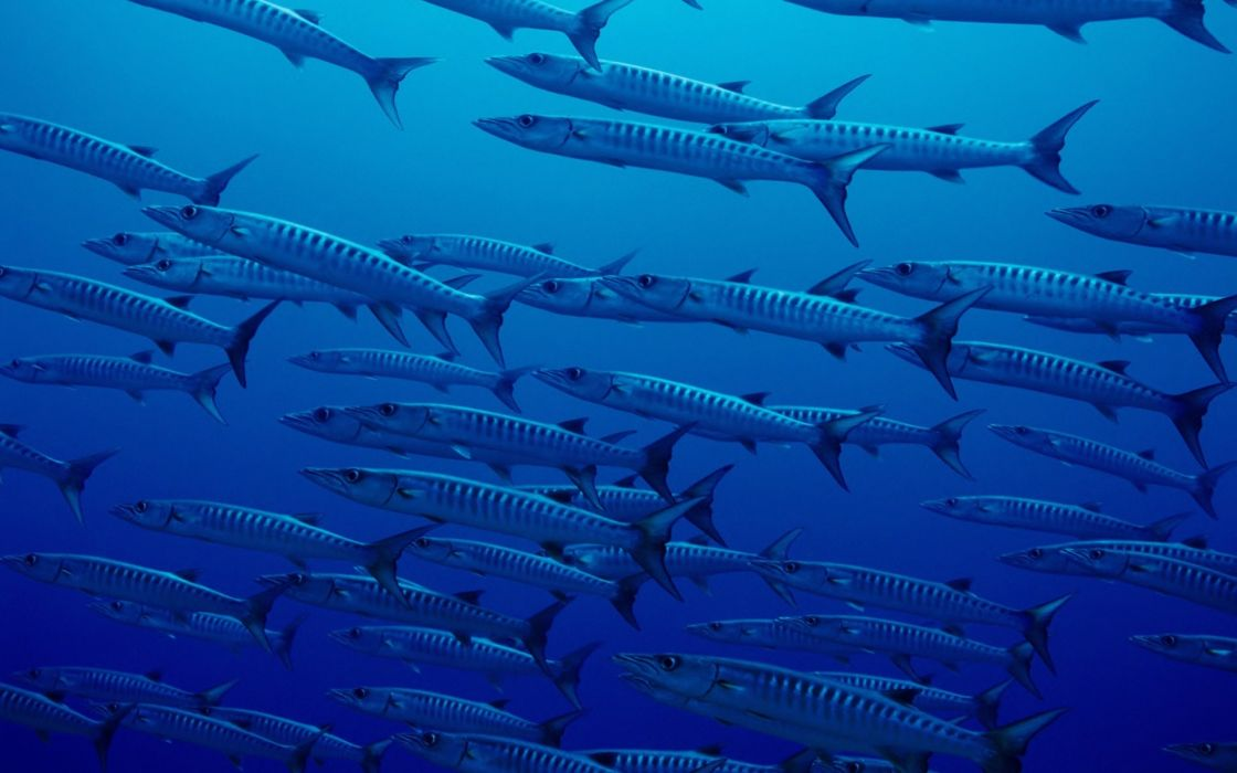 nature ocean fish blue sea hd wallpaper wallpaper