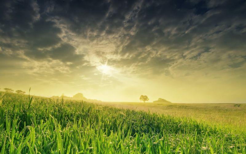 nature landscape field sun grass hd wallpaper wallpaper