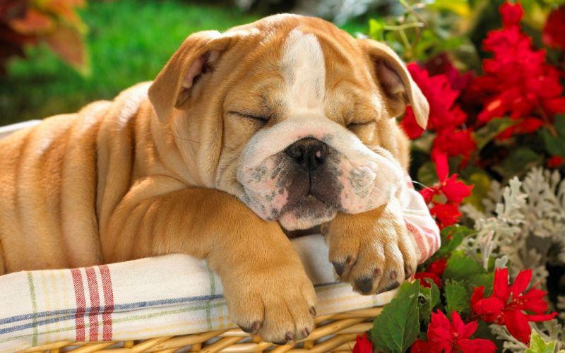 animals dogs baskets wallpaper