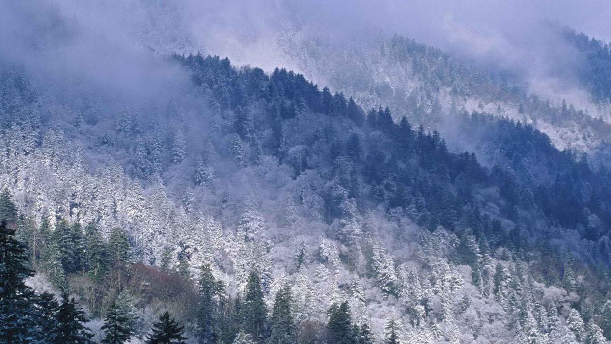 mountains trees forests Tennessee wallpaper