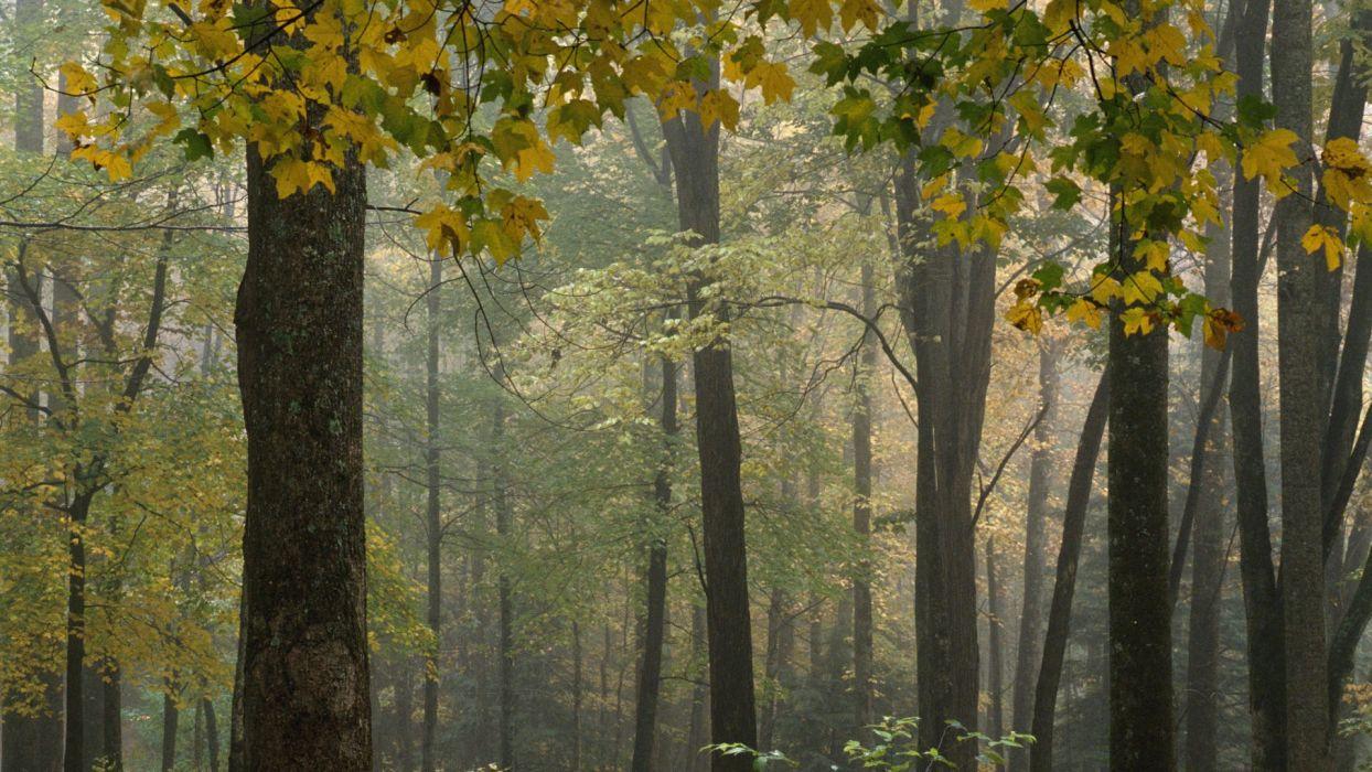 trees forests leaves fog bark National Park branches North Carolina wallpaper