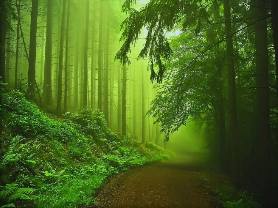trees paths mist wallpaper