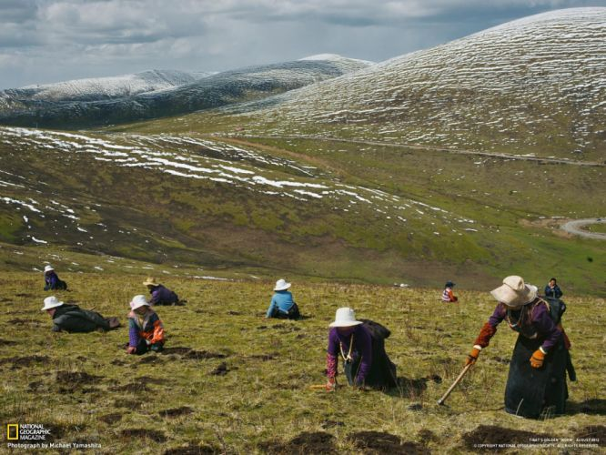 women nature hills National Geographic Tibet dig wallpaper