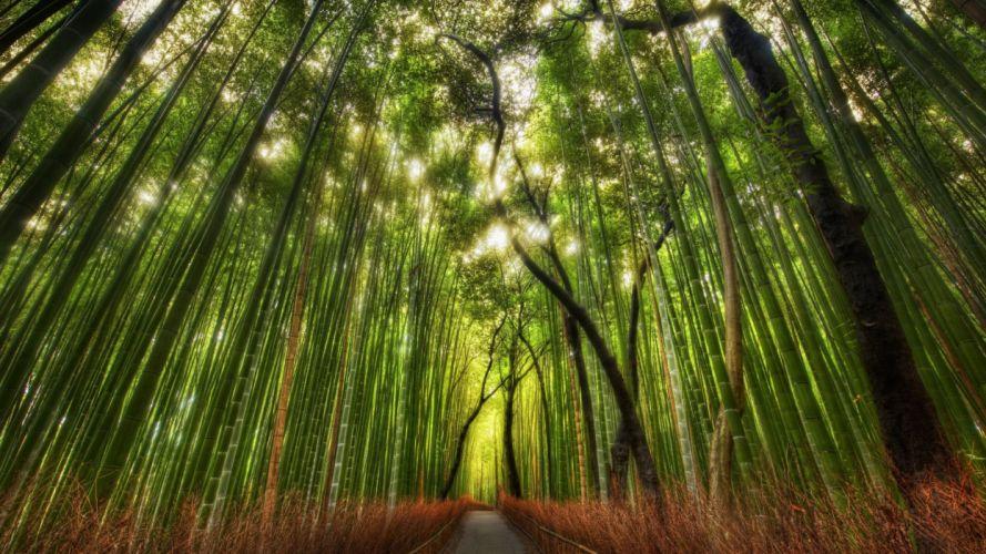 nature trees leaves grass plants sunlight wallpaper