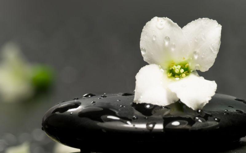 flowers water drops white flowers wallpaper