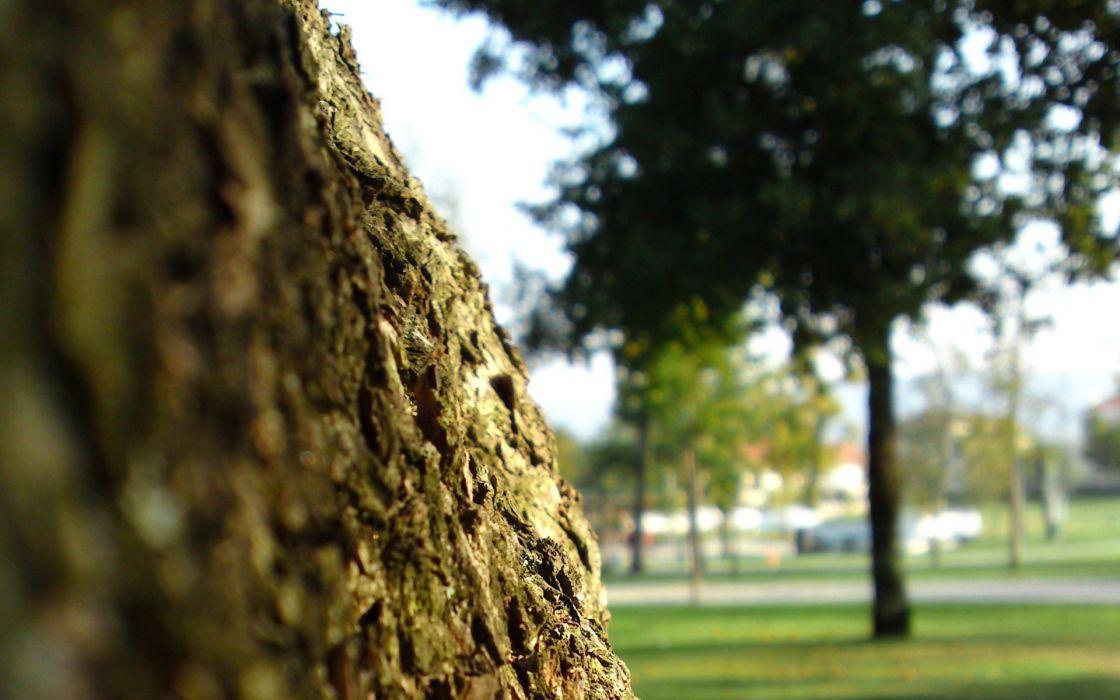 trees macro wallpaper