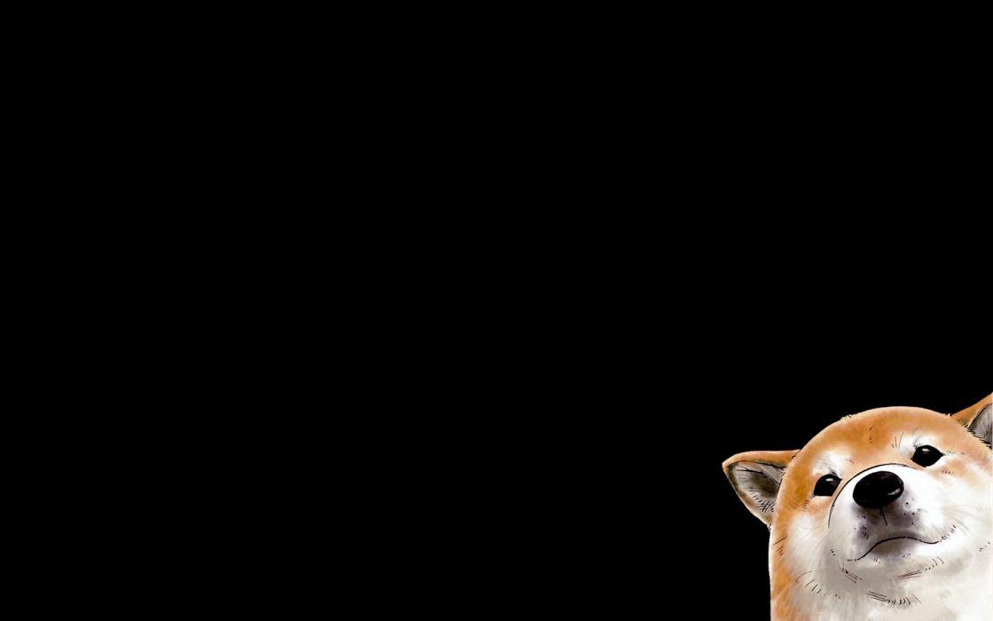 dogs Corgi black background wallpaper