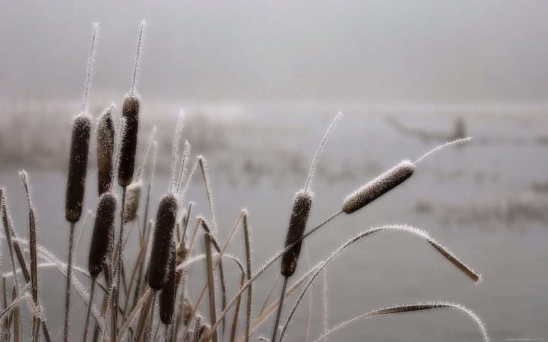 landscapes nature november spikelets hoarfrost wallpaper