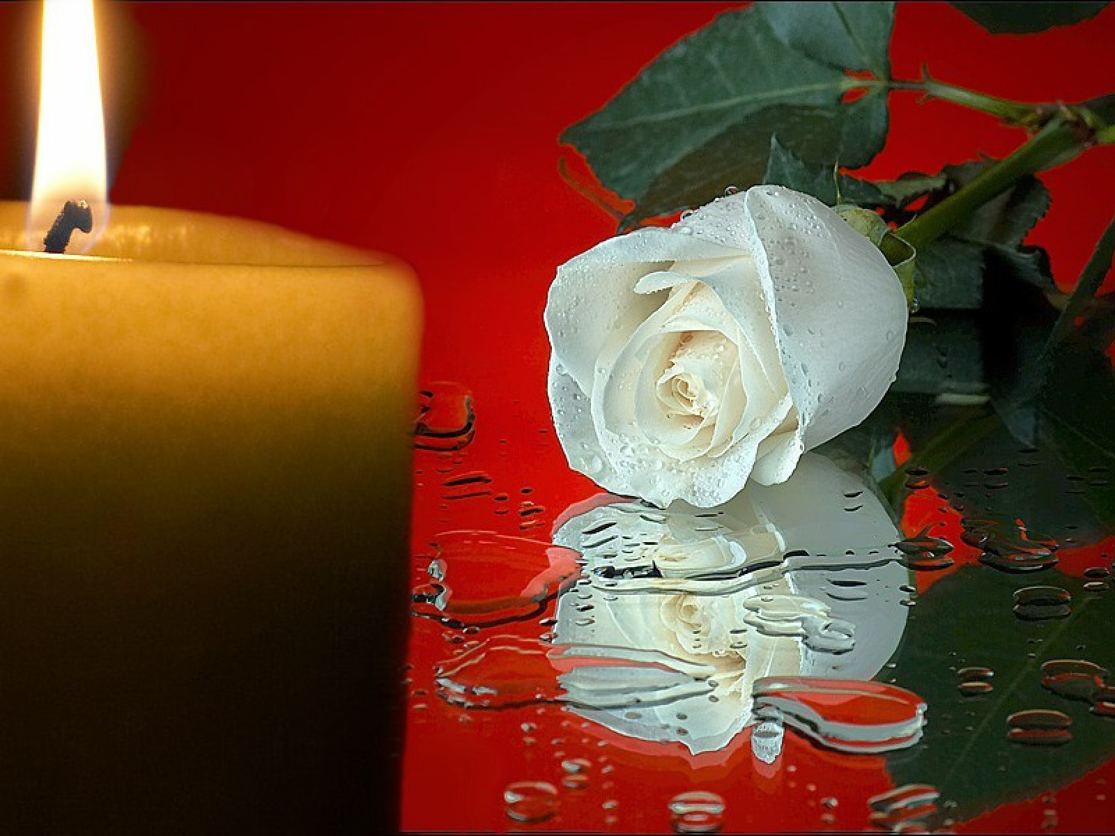 Water flowers candles roses white flowers wallpaper ...