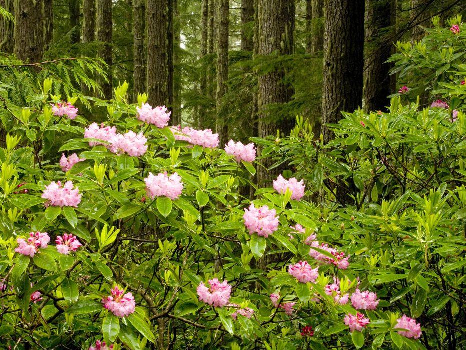 forests national Washington wild wallpaper