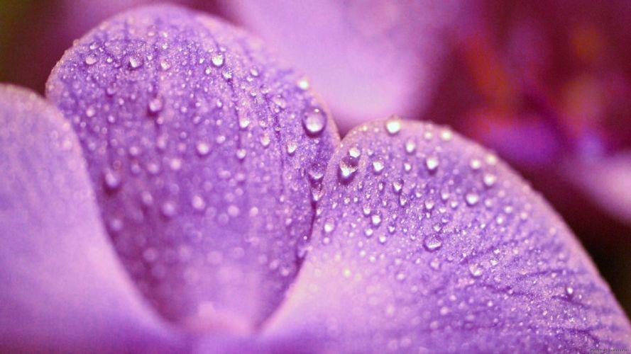 flowers water drops wallpaper