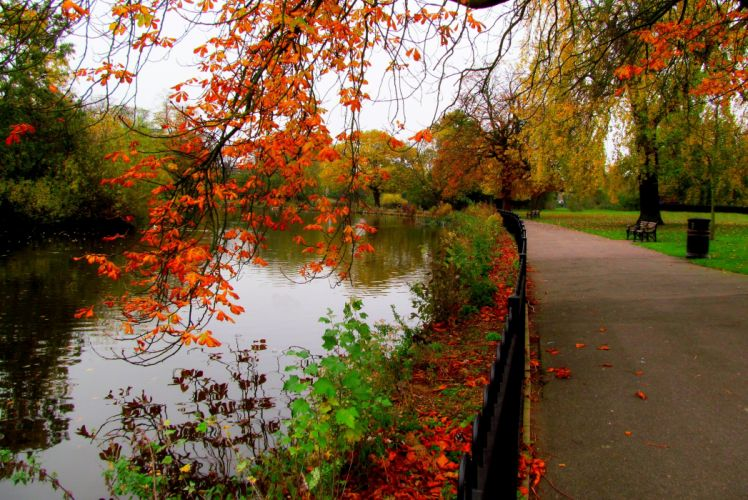 autumn nature trees walk river park hdr leaves alley forest wallpaper