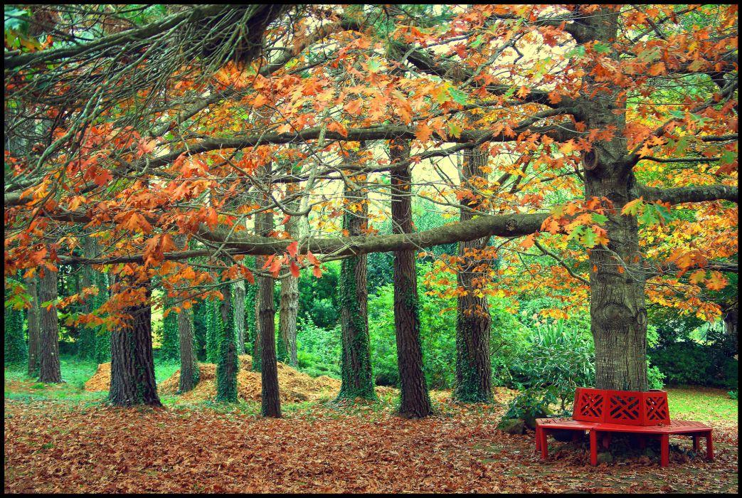 autumn park bench wallpaper