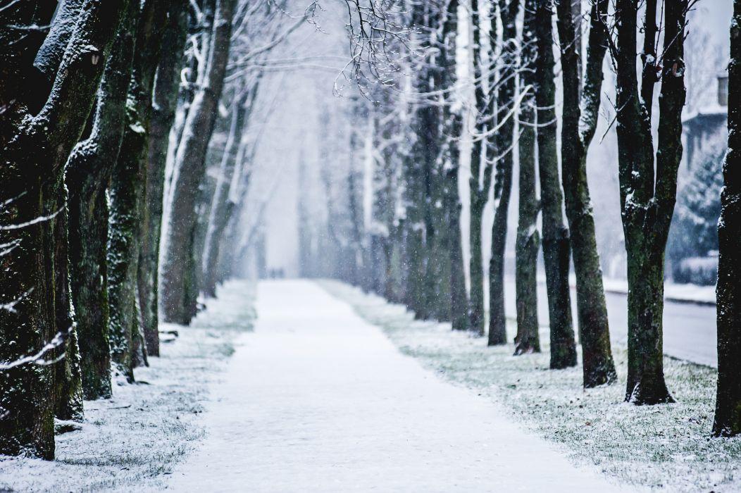 city winter alley trees snow wallpaper
