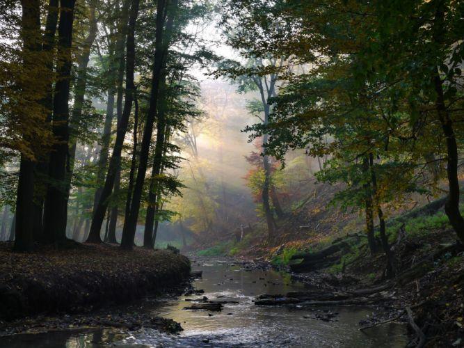 creek rays forest sun river autumn wallpaper