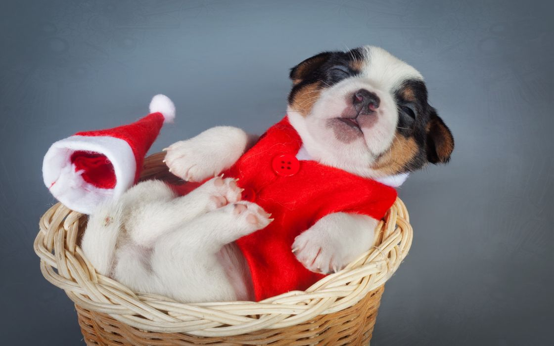 Dogs Christmas ( New year ) Puppy Animals wallpaper
