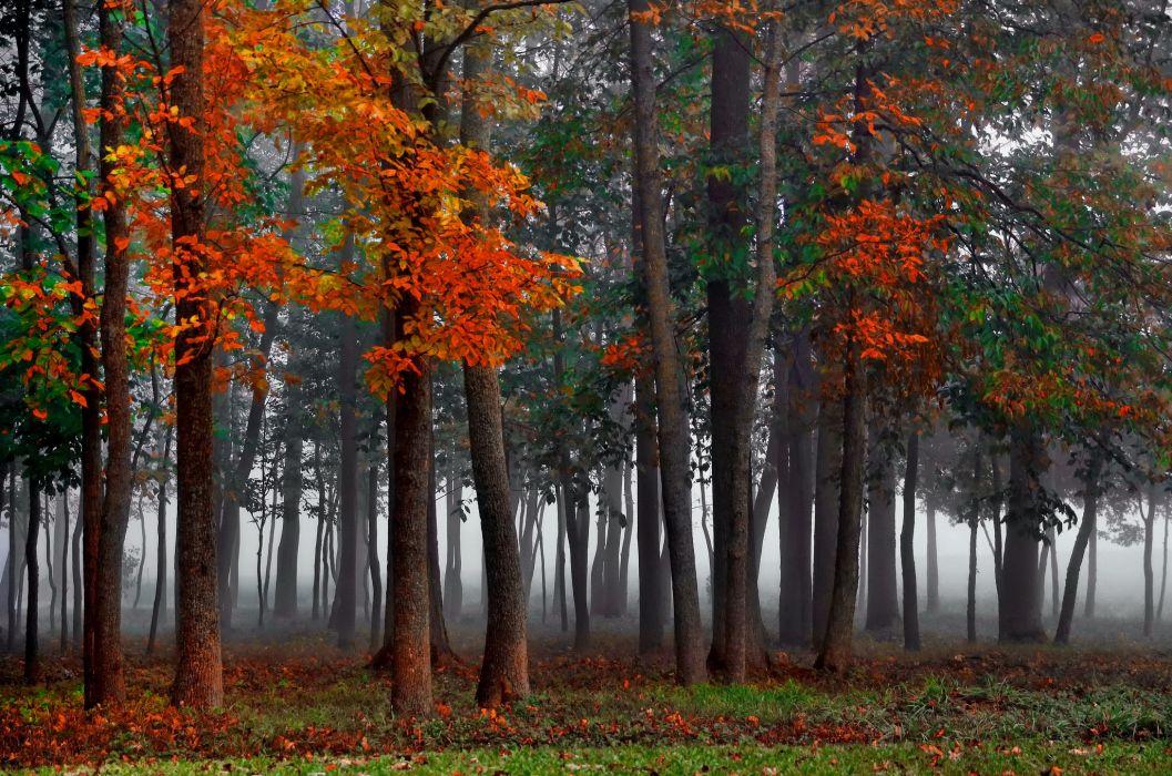 forest fog autumn wallpaper