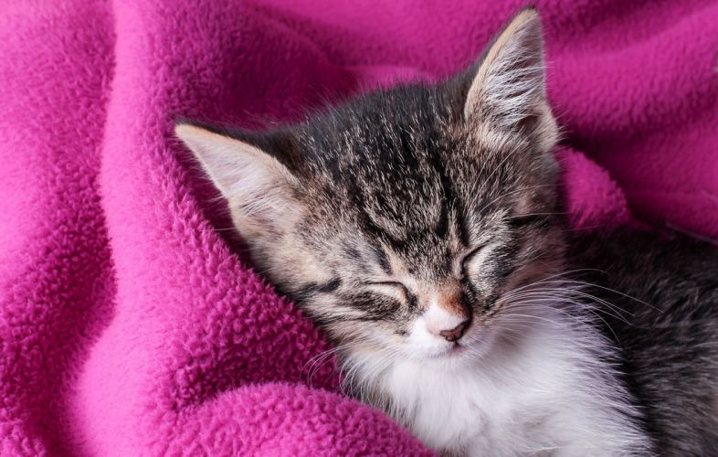 kitten sleeping sleep plaid wallpaper