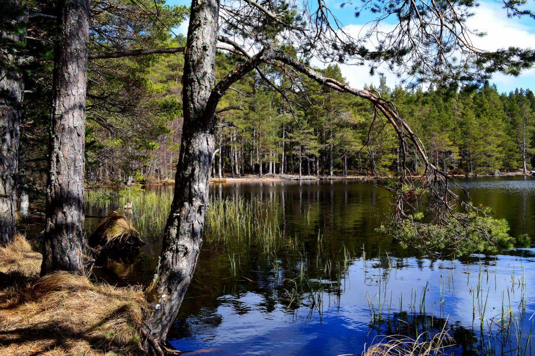 Lake Finland Water Lapland Trees Nature reflection wallpaper
