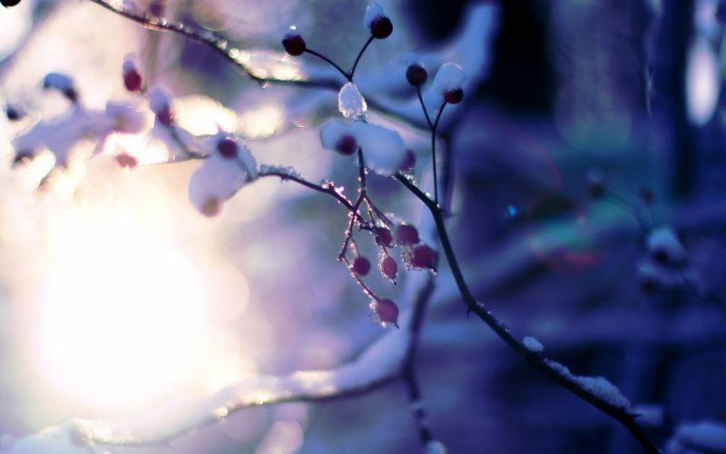 macro tree plant snow winter tree trees branches sun bokeh blur wallpaper