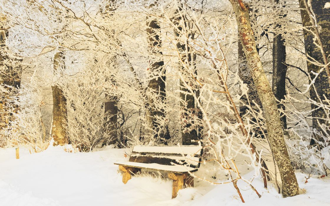 park bench bench winter cold snow trunks nature branches frost trees park wallpaper