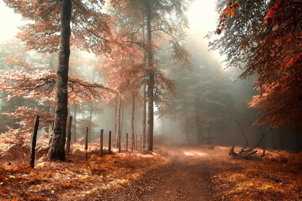 road fence fog forest autumn wallpaper