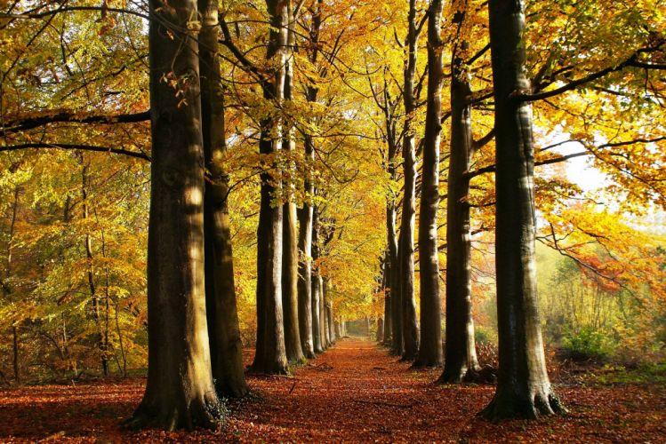 Seasons Autumn Trees Avenue Nature wallpaper