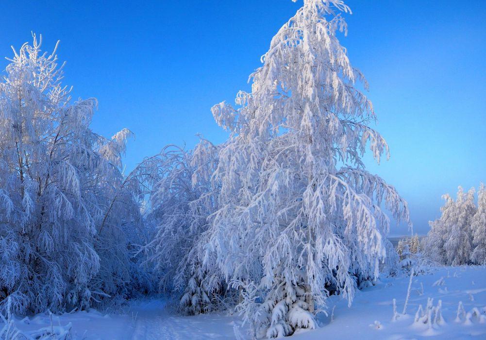 Seasons Winter Snow Nature    g wallpaper