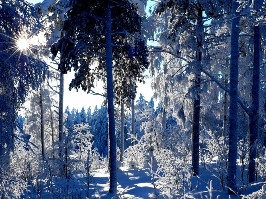 Seasons Winter Trees Snow Nature wallpaper