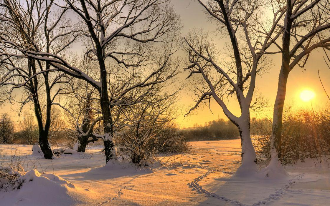snow winter sun tree wallpaper