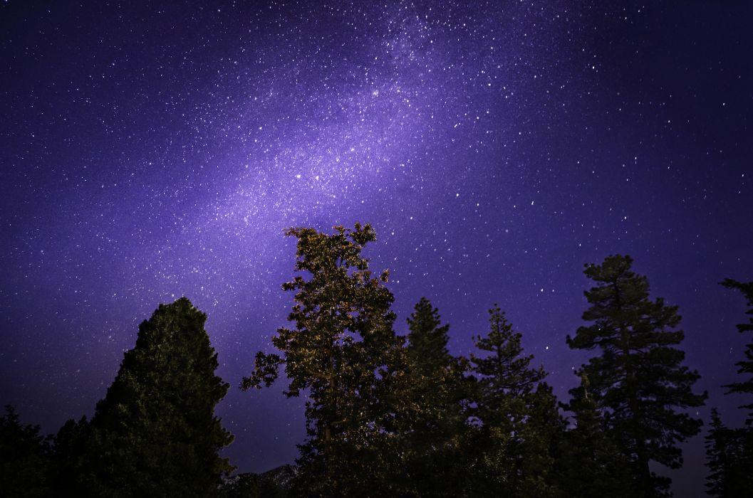 stars trees night sky wallpaper