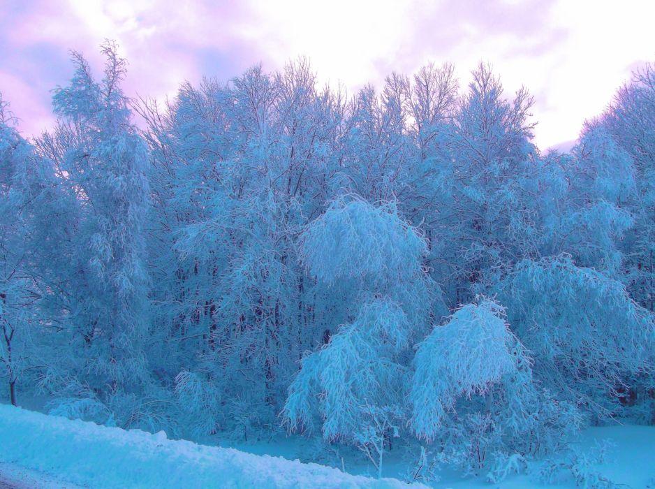 winter forest trees landscape wallpaper