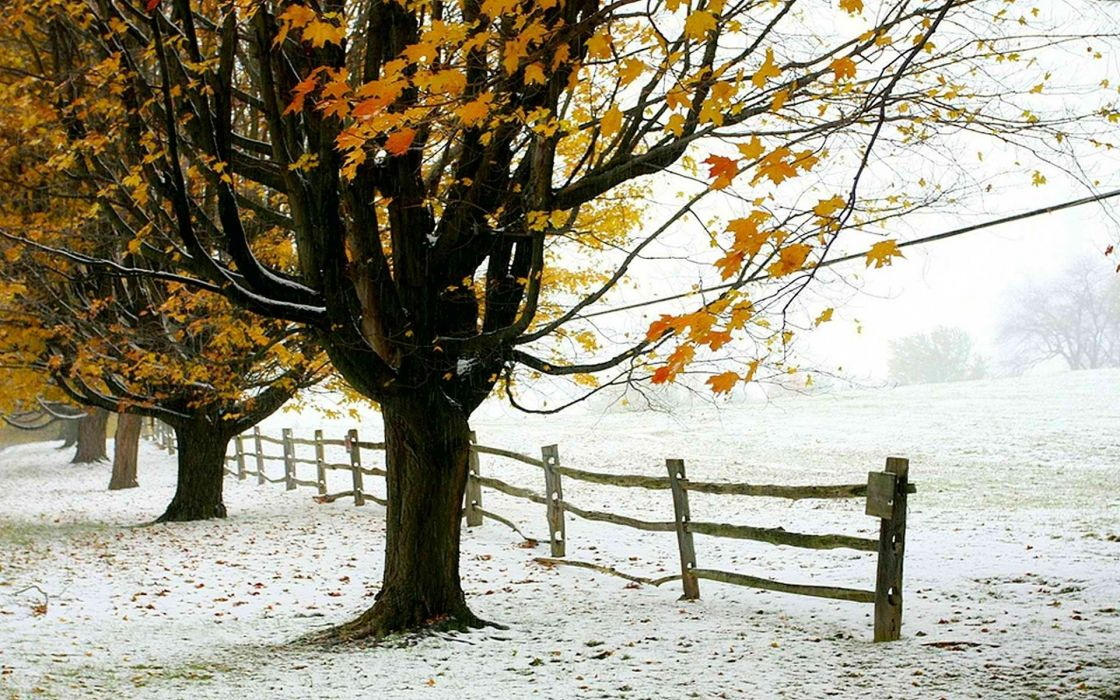 winter trees foliage the first snow fence autumn wallpaper