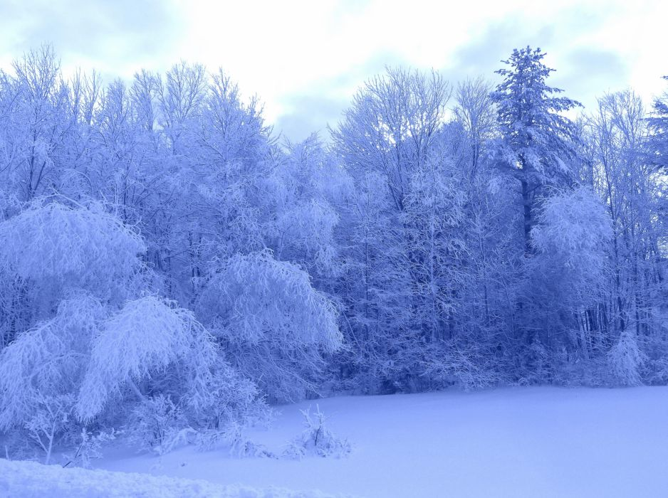 winter trees forest nature landscape wallpaper