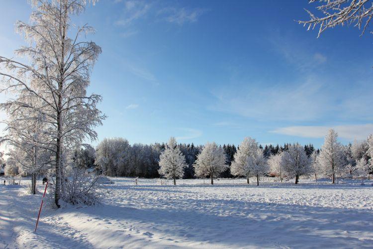 winter trees landscape wallpaper