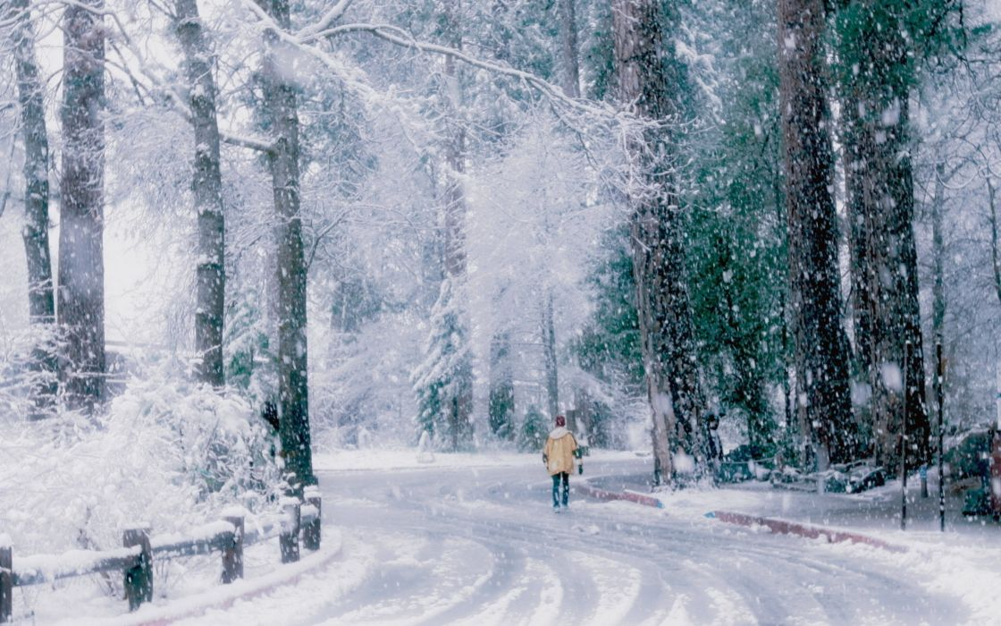 winter trees snow road wallpaper