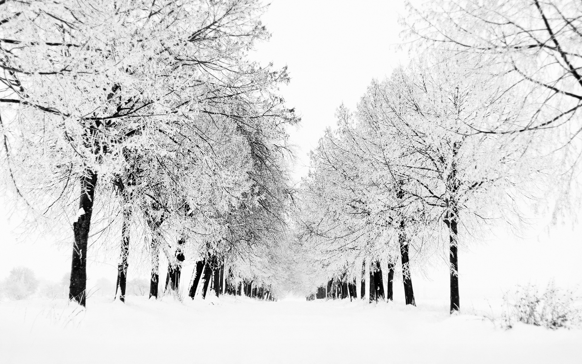 winter winter wallpaper view snow blizzard trees nature