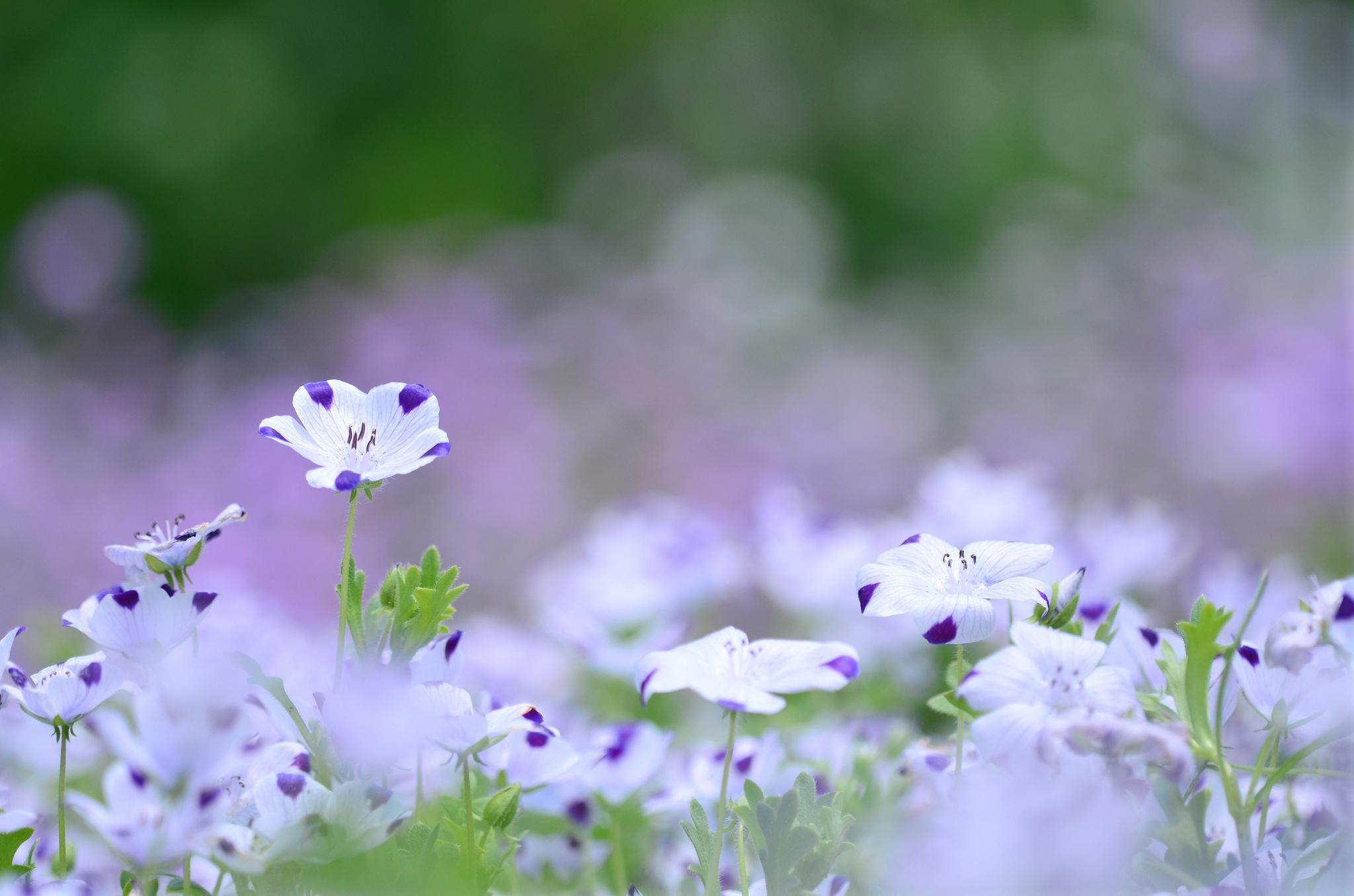 Nature Flower Garden White Green Hd Wallpaper Wallpaper 2048x1356