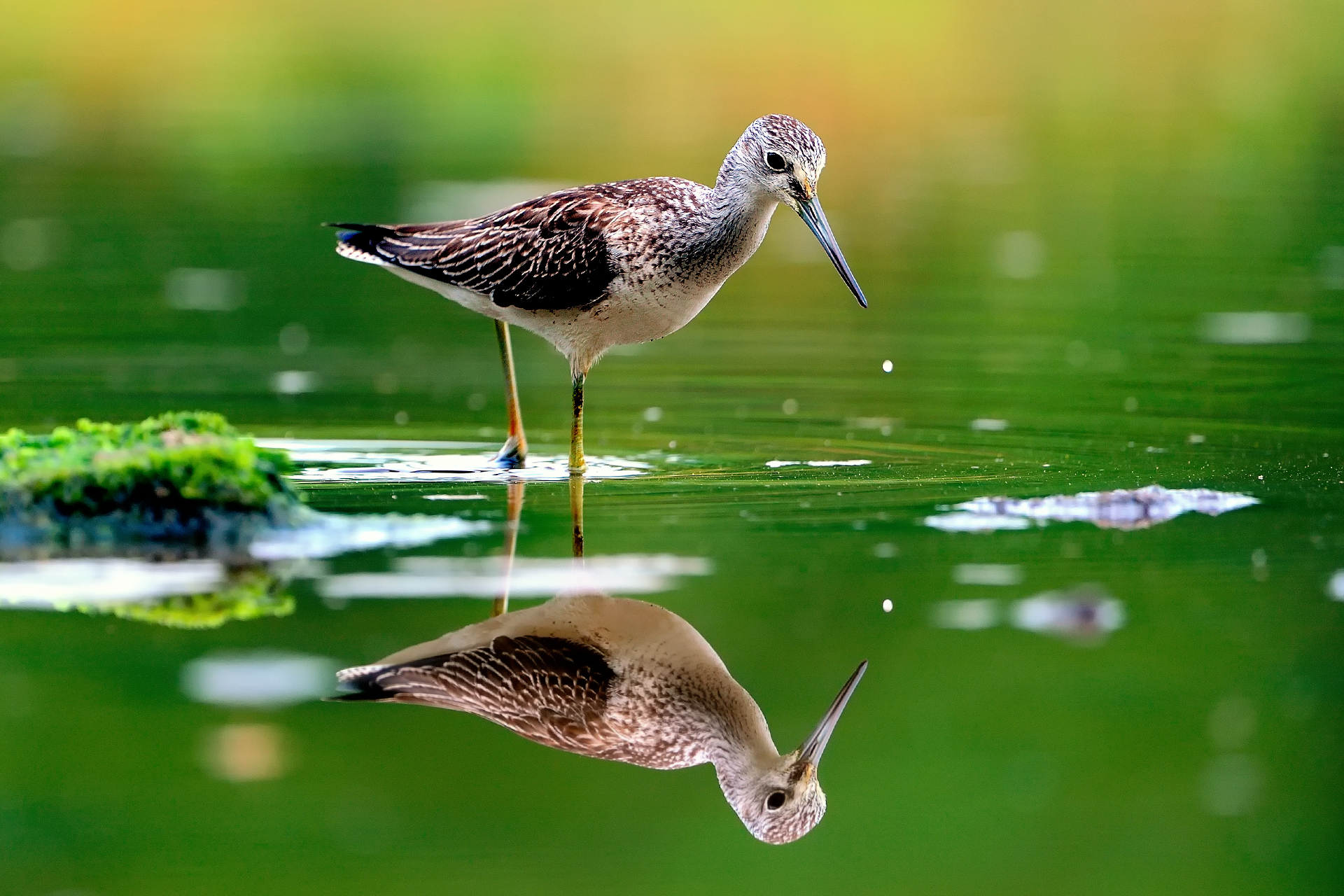 Nature animal bird water reflection green hd wallpapers wallpaper