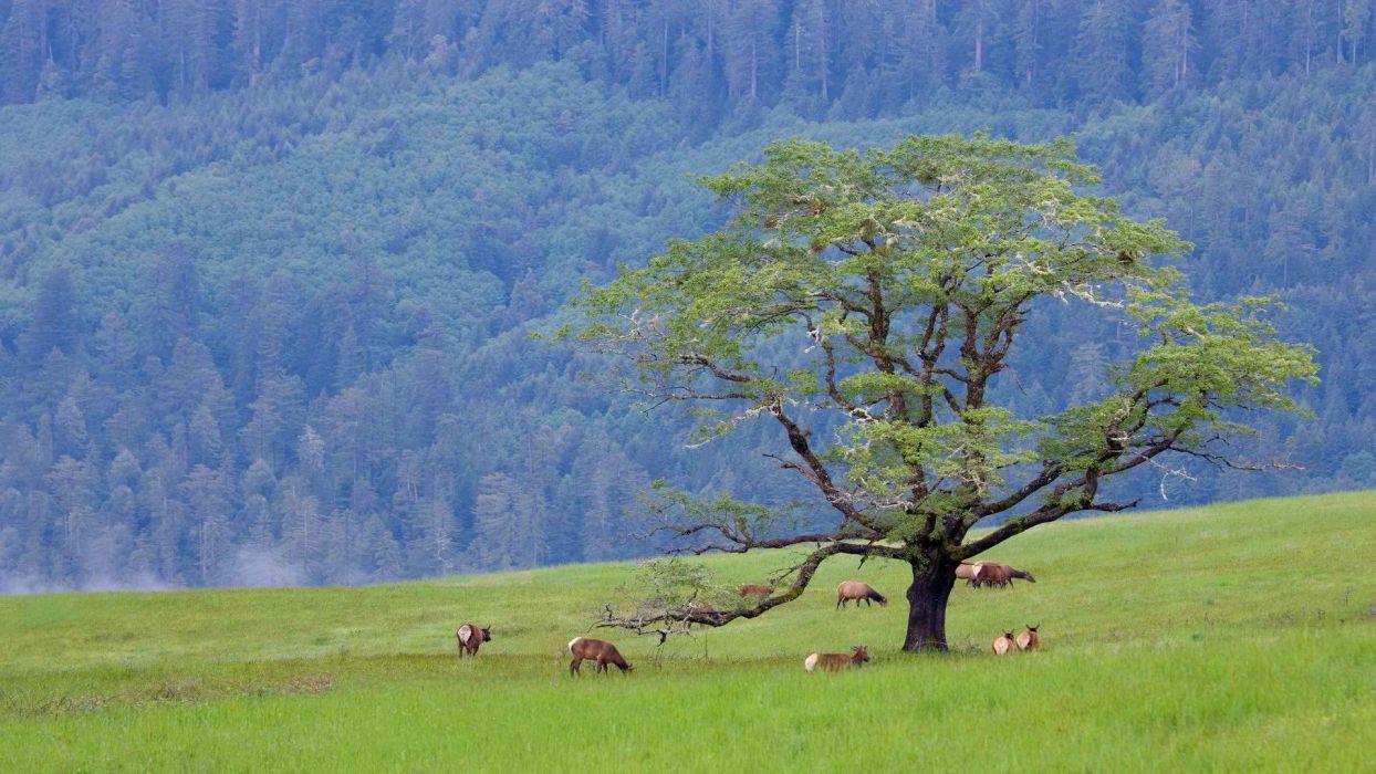 hills California elk National Park bald wallpaper
