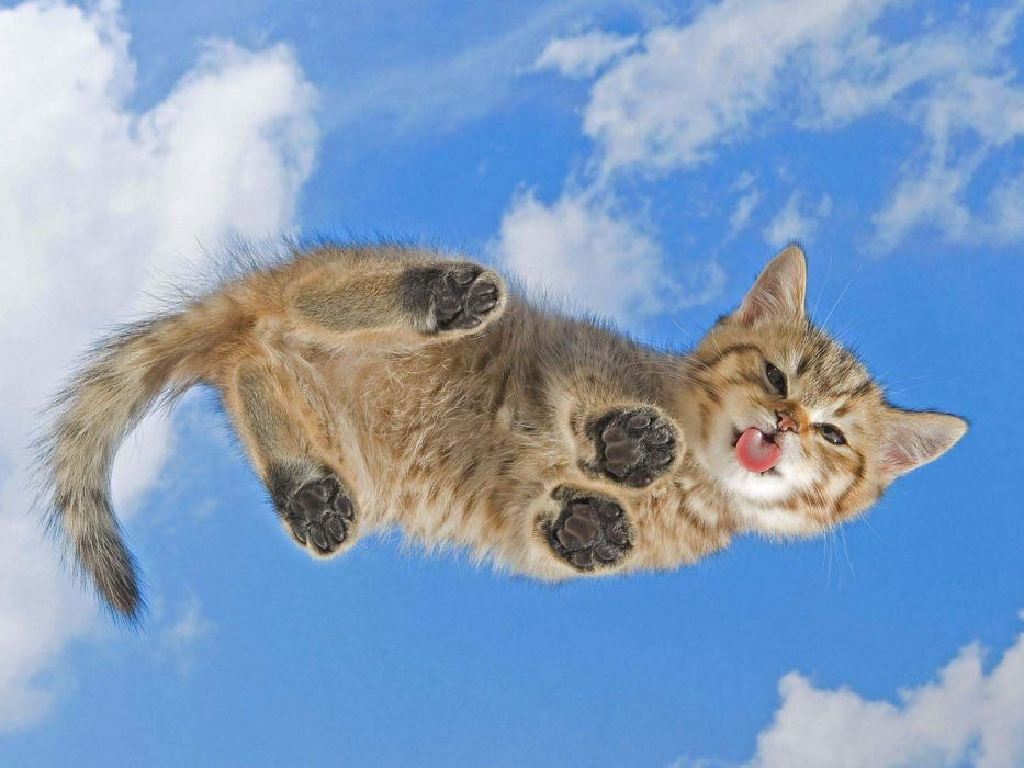 clouds cats tongue kittens skyscapes wallpaper