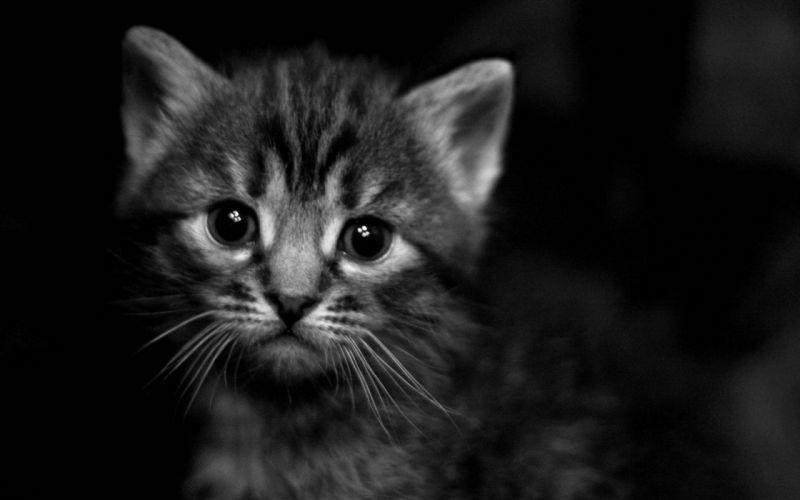 black dark cats animals kittens greyscale wallpaper