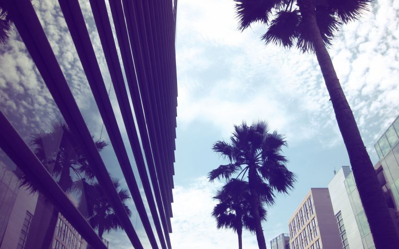 glass architecture Muse urban buildings palm trees modern reflections cities wallpaper