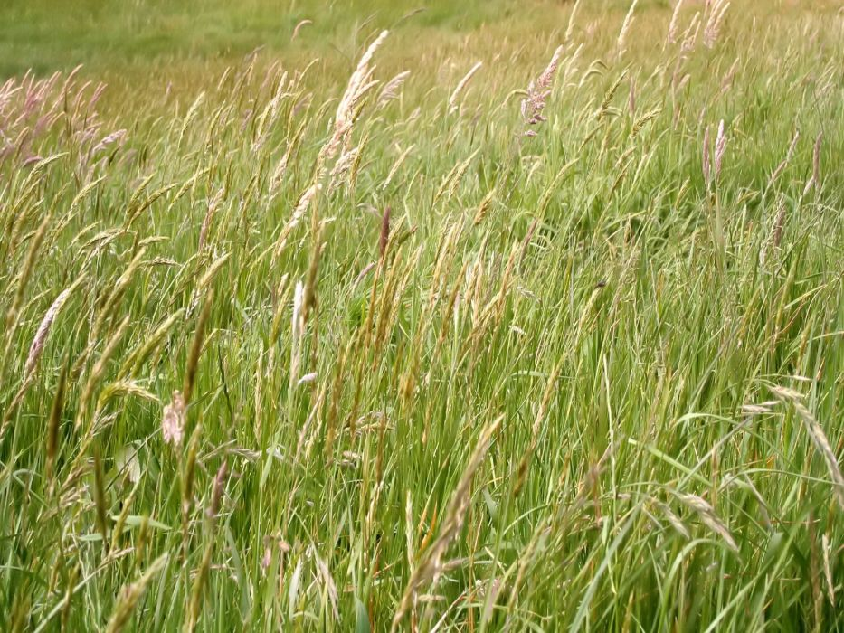 landscapes nature grass wallpaper