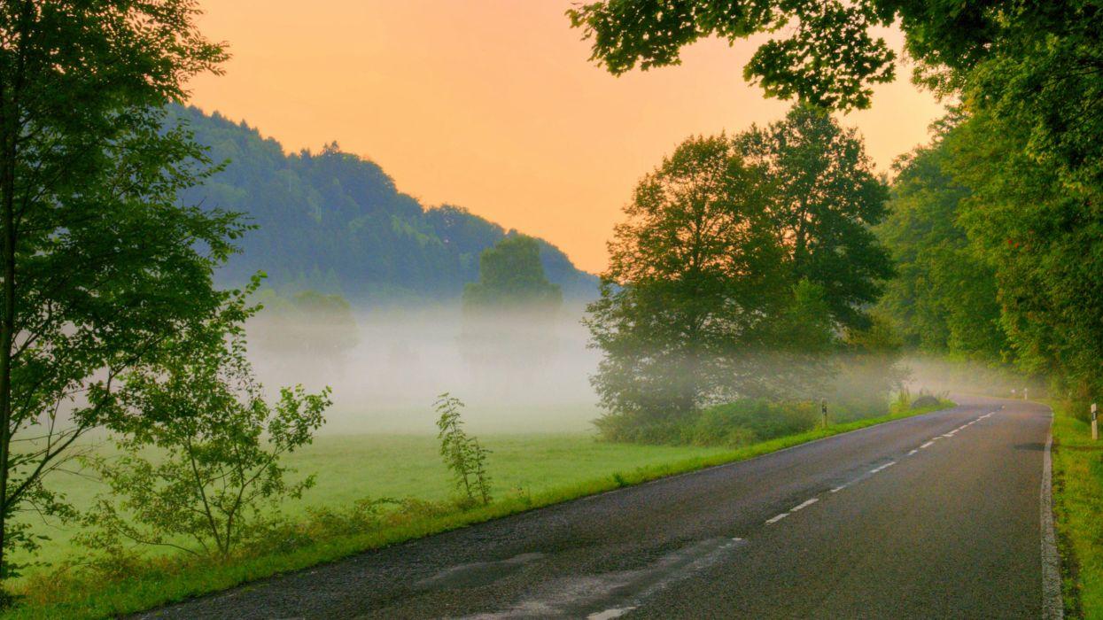 trees mist roads wallpaper